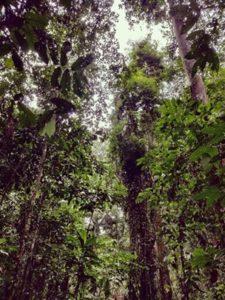 Photo of trees